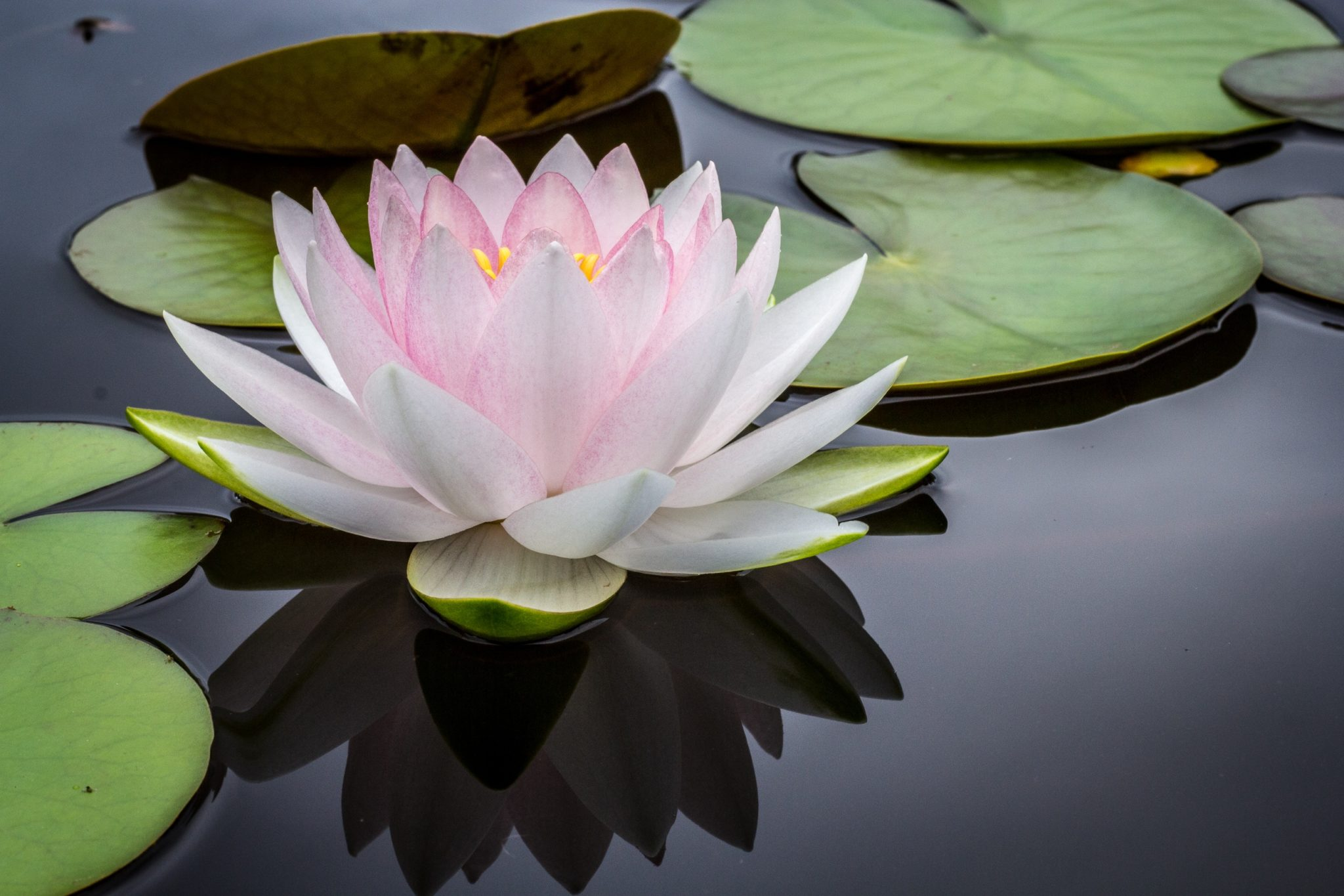 fleur-de-bach-bien-être-au-rendez-vous-blog